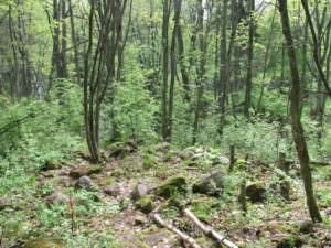 Ehrensvärdinpolku kulkee metsässä
