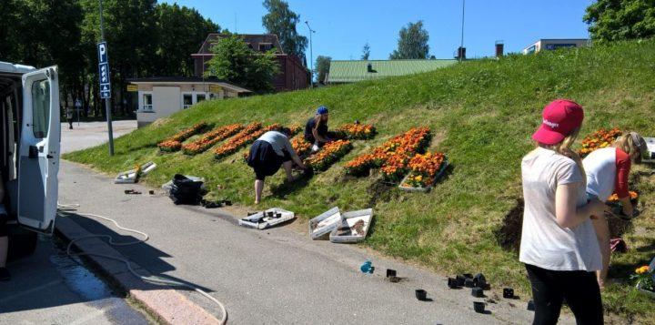 Linja-autoaseman Loviisa kukkaistutuksen istuttaminen. Plantering av Lovisa-blomrabatten bredvid den gamla busstationen..