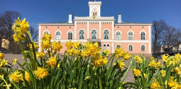 Narsissit Raatihuoneen edessä Rådhuset på sommaren