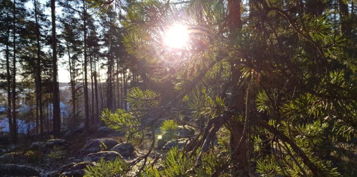 metsä skog