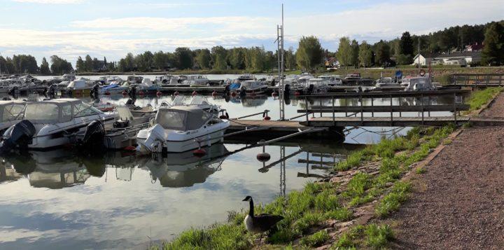 Loviisan Laivasillan venesatama ja hanhi - Skeppsbrons båthamn i Lovisa och en gås