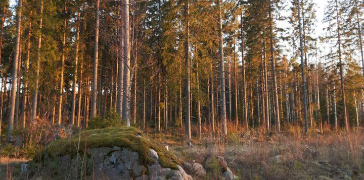 Metsää - Skog