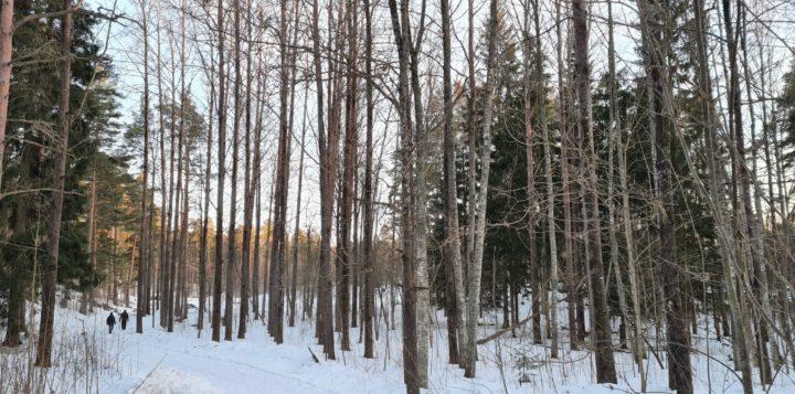 Luminen virkistysmet kevättalvella Loviisassa. Snöig rekreationsskog på vårvintern i Lovisa.